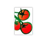 184 4x6 tomat