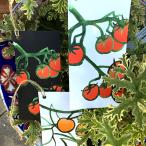 enkla-kort-m-snöre-tomater-cloudberryfield-design