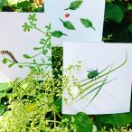 kort-med-insekter-cloudberryfield-design