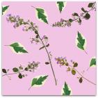 208-garden-life-stenkyndel-&-kornellblad