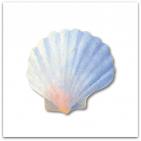 076-mussla