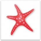 066-sjöstjärna