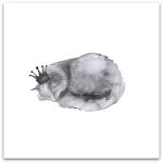 240-katten-sover