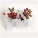 Plantkasse/take away/bageri transparent 250st/kartong