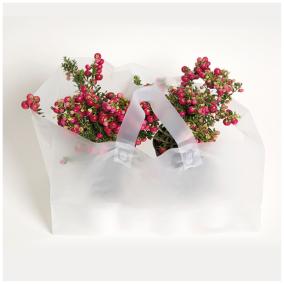 Plantkasse/take away/bageri transparent 250st/kartong -