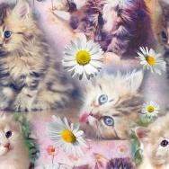 Katter & prästkragar