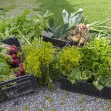 Utbud av grönsaker