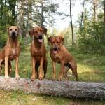 Tilly , Alva och Vilda