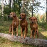 Tilly, Alva och Vilda
