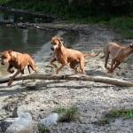 Nala , Tilly och Vilda