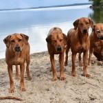 Nu är vi trötta, Vilda , Alva , Nala och Tilly