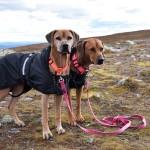 Tilly och Alva