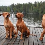 Leo, Vilda , Nala och Kovu