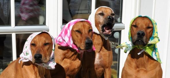 Fina påskkärringar Vilda , Alva , Tilly och Welvet