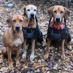 VILDA, TILLY och ALVA