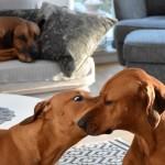 MÄK ger puss till mamma ALVA