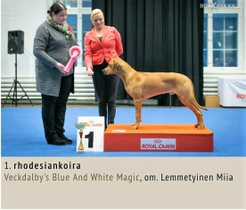 Royal Canin Pyppy show Helsinki BIR och BIG - 1