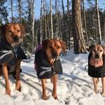 ALVA,VILDA och TILLY