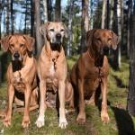 VILDA,TILLY och ALVA