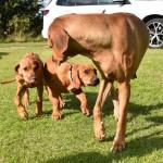 Roxy och Ellie med Mamma Vilda