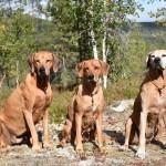 Alva , Vilda och Tilly