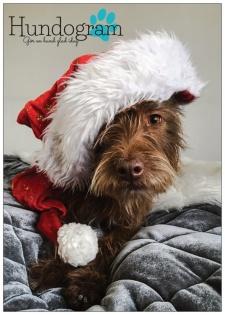 Hundograms Julkort