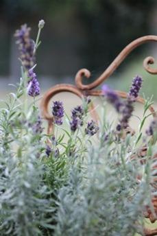 Lavendelhydrolat 100 ml