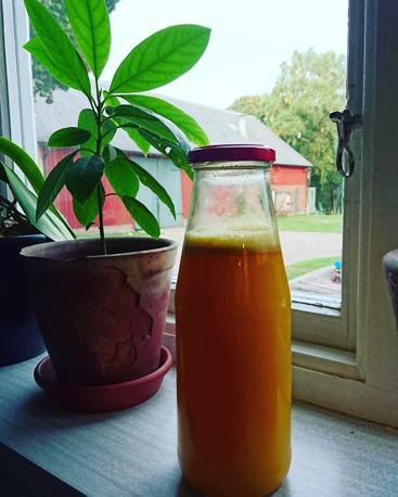 Immunförsvarsshot. Det sägs emellanåt att du inte kan hindra en förkylning, vilket så må vara sant men har du ett starkt/svagt immunförsvar är du mindre/mer mottaglig för bakterier/virus som skapar oreda i immunförsvaret. Det vill säga vi tar bättre/sämre hand om dessa. Det finns vissa kryddor med mera som anses påverka immunförsvaret positivt. Ingefära, gurkmeja och citron är några av dem. Här ser du en dryck som vi shotar dagligen. Det är en bit ingefära som jag pressat i råsaftcentrifugen, saft från 1 ekologisk citron, 1 tsk ingefära samt en snudd färsk honung. Blanda ihop allt tillsammans med 5 dl vatten genom att köra drycken i mixern eller med en mixerstav. Förvara i kylen och ta ett snapsglas varje dag.