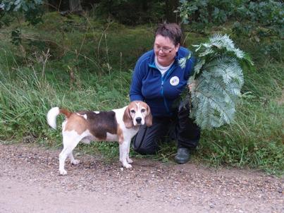 Røraskogen's Yazzo Velvax (Snoopy) med fører Berit Seljåsen (bildet er lånt fra Berit sin fb - profil.