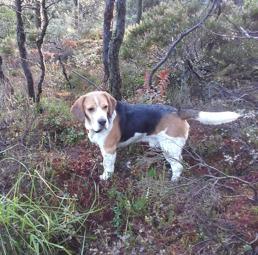 Skrovelmyras Emil SE32461/2011 til Bjørnar Tønnesen