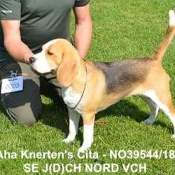 SE J(D)CH NORD VCH N UCH Aha Knerten's Cita - NO39544/18