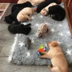 Alla sover