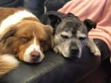 Morgon på hunddagiset, hundarna är glada att träffa varanra igen efter en hel natt ifrån varandra!