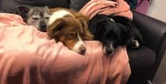 Under hundarnas vila är det även lunch för personalen. Efter lunchen vilar de gärna tillsammans med hundarna i boxarna.