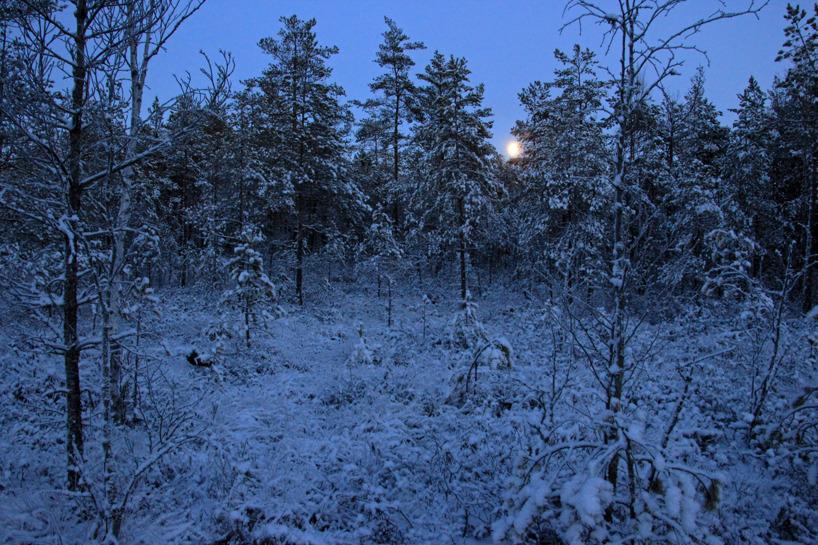 Fullmånen långt där borta. Fullmånen påminner alltid om varg och dess ylande.