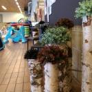 Björkstammarna sitter ihop med rundstål som kommer att rosta vackert.