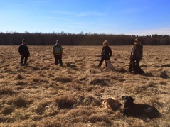 Lugna hundar på Nkl träningen