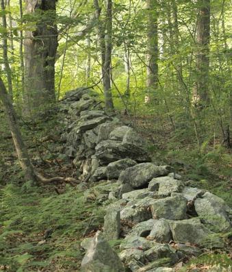 Den närliggande skogen är underbar. Hit går ofta utflykterna.
