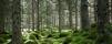 skogenTop