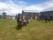 Hästar, sommar Lomviken