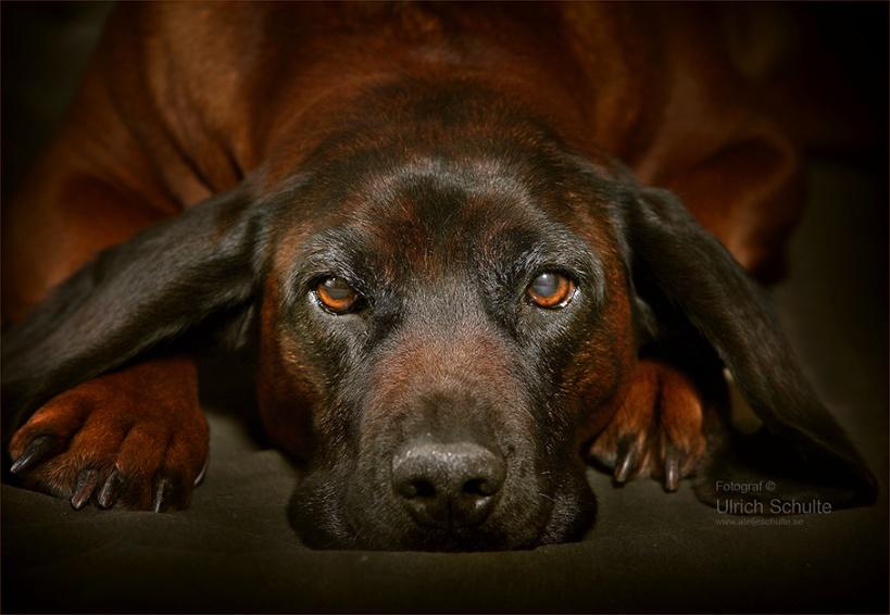 Hundfoto,djurfotograf Ulrich Schulte