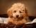Hundfotografering,djurfoto,djurfotografering Södertälje