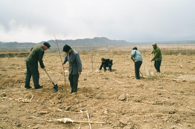 Plantering av träd i Kina under ledning av Mrs Wei som vi träffar i The Green Planet.
