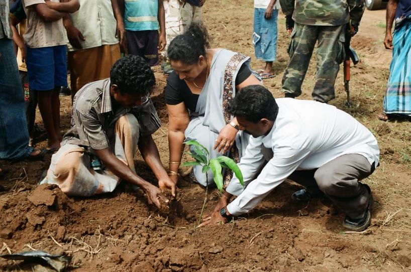 Trädplantering på Sri Lanka.
