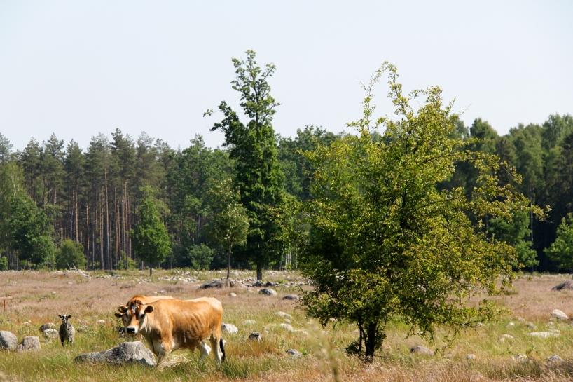 Böde Ecopark. Från inspelningarna med Sveaskog.