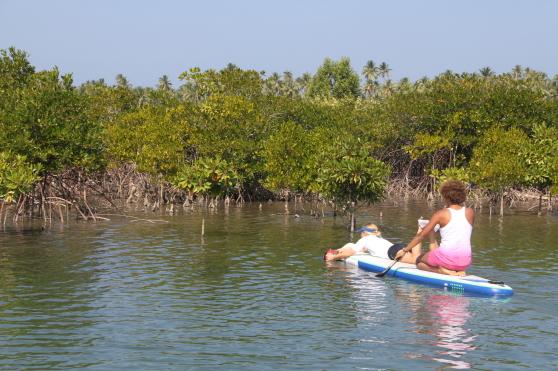 Mangroverötter filmas under vatten i Burma.