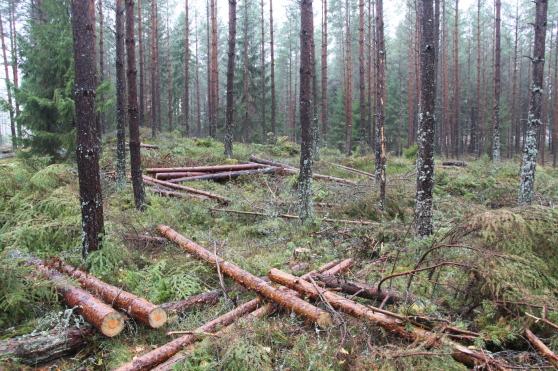 Småland, under inspelningarna med Sveaskog.