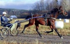 Challange Hornline-2012-nov