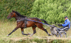 Challange Hornline-2013-juli