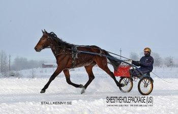 Nya andelshästen hos Stall Kenny tillsammans med Björn Goop i sulkyn, Shestheholepackage.
